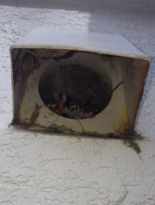 birds nest in a dryer vent duct